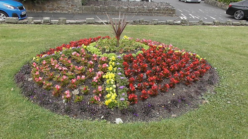 Church Green Whickham flower beds June 18 (5)