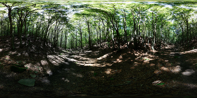 The beech forest around the Barigazzo crests - Varsi, Parma, Emilia Romagna, Italy