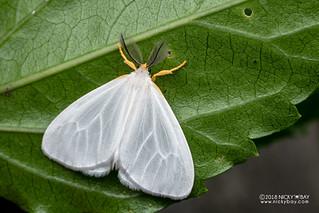 Moth - DSC_6987