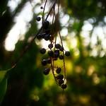 2018:08:22 - 18:05:06 - Fruit Garden Bokeh - Schleswig-Holstein - Deutschland
