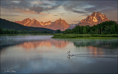 Oxbow Bend and the Pelican