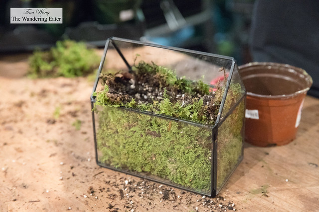 How the glass box looks like after placing in moss and cactus potting soil