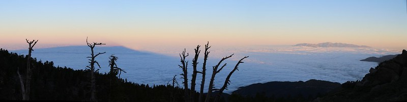 The dawn shadow of San Bernardino Peak is on the marine layer clouds to the west from Limber Pine Bench