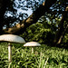 sandy hook mushrooms 2