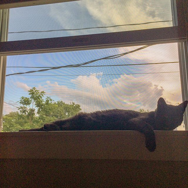 Lazing on a hot afternoon. #blackcatsofinstagram #blackcats #blackcatsrule