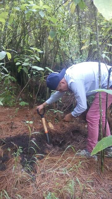 Reforestación - Tetela del Volcán (10/08/2018)