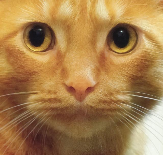 Koey Face     (Explored), Nikon D7200, AF Nikkor 50mm f/1.8