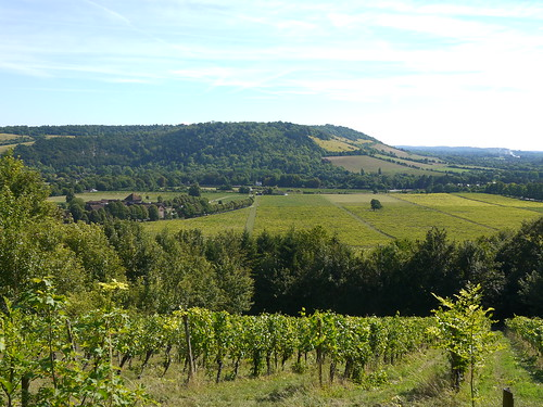Views over Denbies Vineyard to Dorking