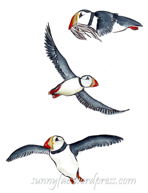 sketches of flying puffins