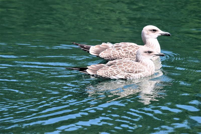 Ducks 16.07 (8)