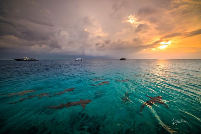 Sunset Sharks