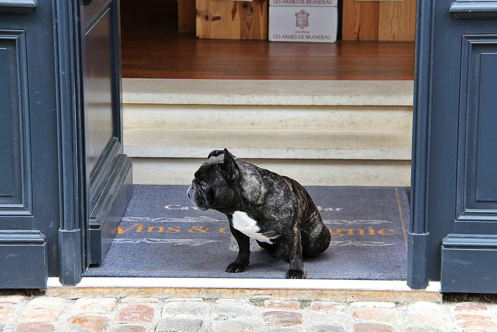 Chien De Garde Guard Dog At Vins Et Compagnie In The Rue
