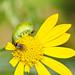 Flower muncher