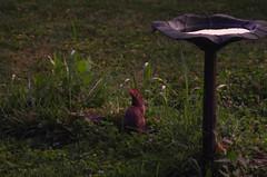 Backyard Bunset