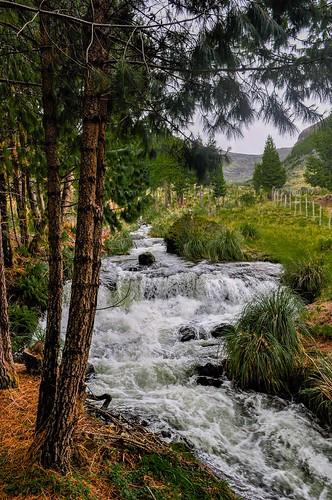 cajas ecuador rio stream riachuelo santuario sanctuary pines brook bosque