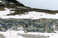 Exploring a Gentoo Penguin Colony on Cuverville Island in Errera Channel