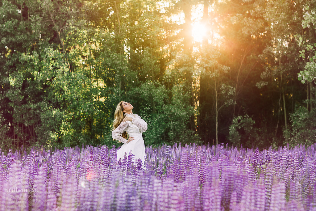 Lupine Photo Session, Prince George British Columbia