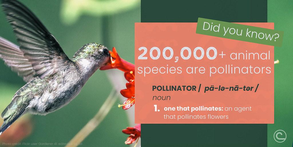 #NACD Pollinator Week