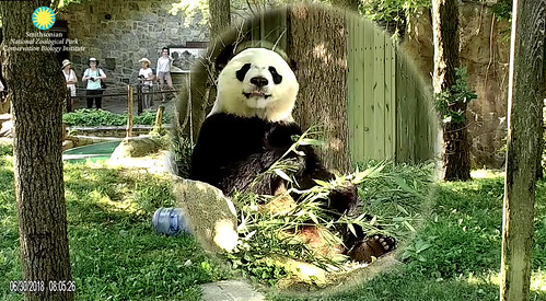 Bei Bei (Hiya visitors! I been so good today, I have a halo. What's that? The halo effect is from the cammie. Say it ain't so!) 2018-06-30 at 8.05.26–.06.26 AM