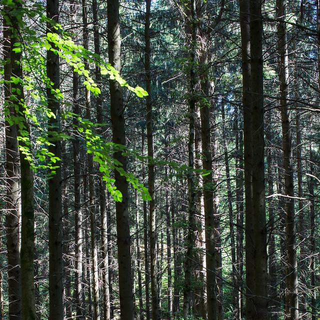 prospect wood 5, Canon EOS 5D MARK III, Canon EF 50mm f/1.2L