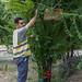 Fundación ADSIS Huerto voluntarios  del Centro Paradoja_20180627_Jose Fernando Garcia_26