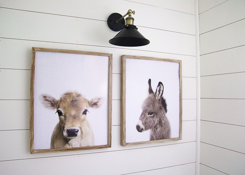 Baby Cow Donkey Prints Pictures