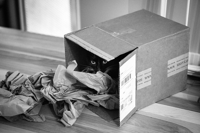 cat in Woolery box