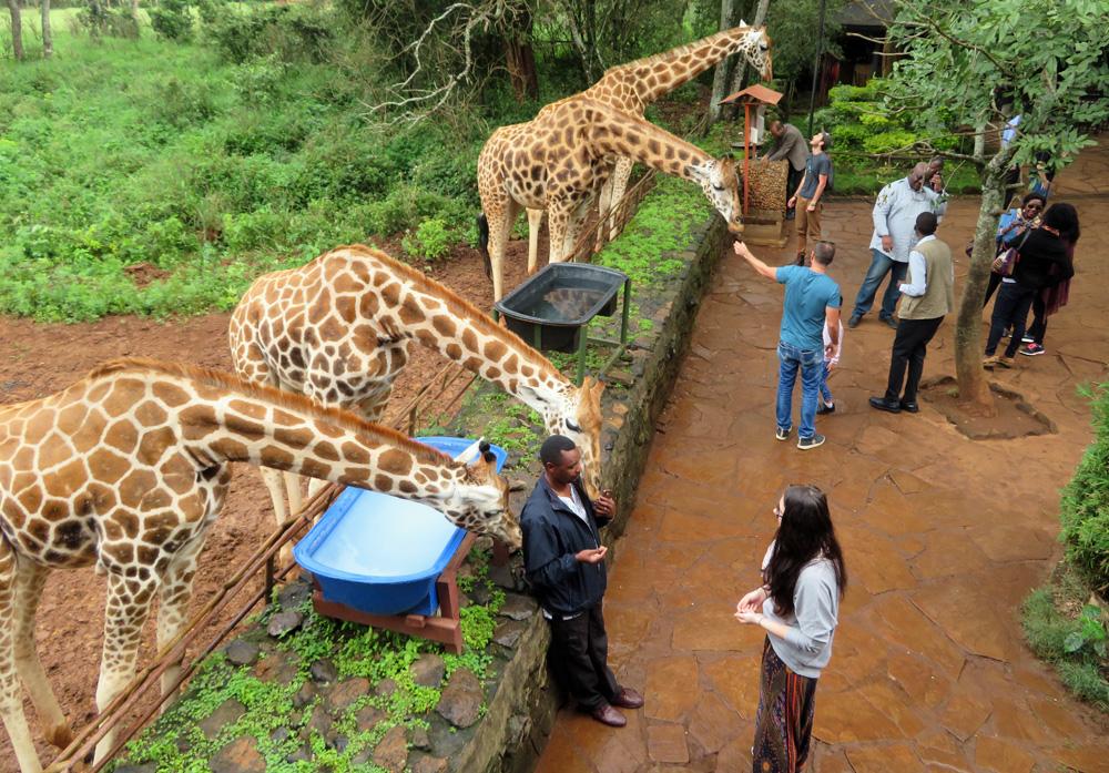 giraffe-kiss-centre-morning-less-crowded