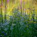 Meadow by mariola aga