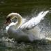 swan by ufopilot