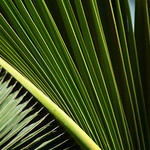 Palm Fronds (patterns)