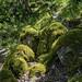 Green & Mossy