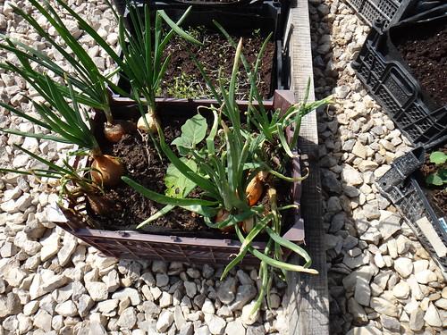 Для временного сада-огорода