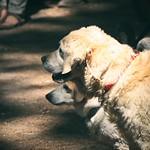 20180708-133935 Dogs Bokeh