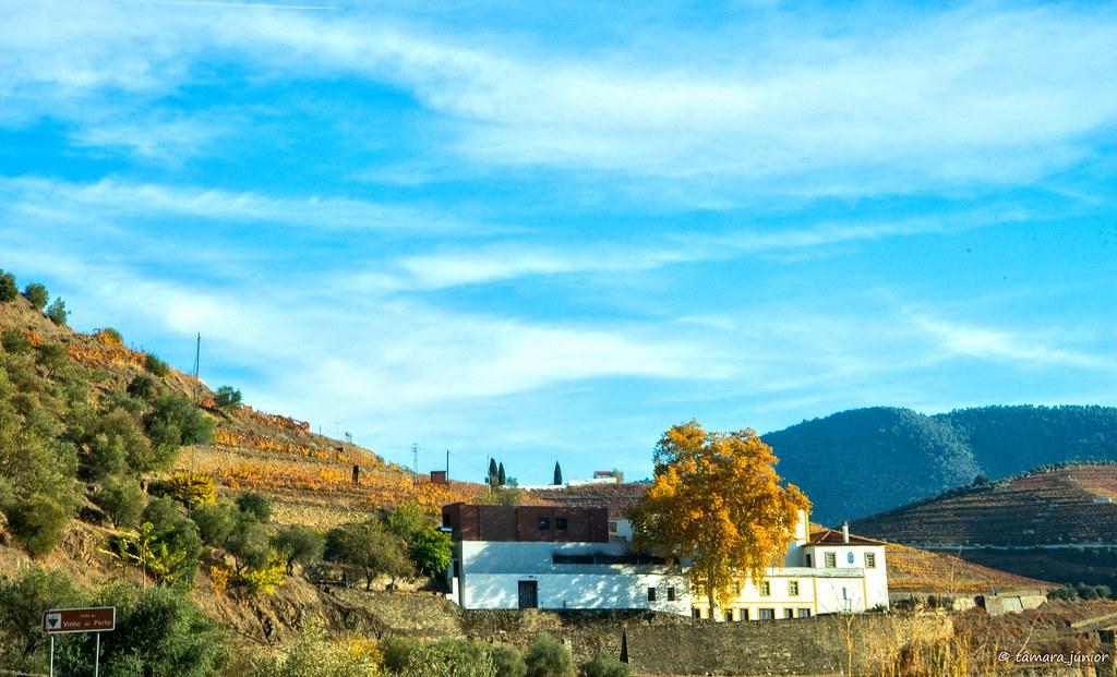 2017.- Pelo Douro no outono I (M313+N222) (228)