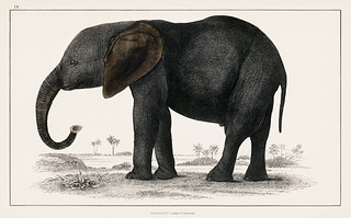 The History of the Earth and Animated Nature (1848) by Oliver Goldsmith (1728-1774), a portrait of a dark grey elephant. Digitally enhanced from our own original plate.