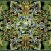 The Green Dragon Star Of Obheryon by Daniel Arrhakis