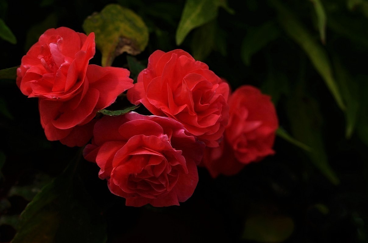 Pretty Red Flowers Pentaxforums