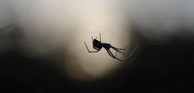 evening spider silhouette