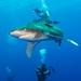 BSoUP Red Sea trip - Jun 18