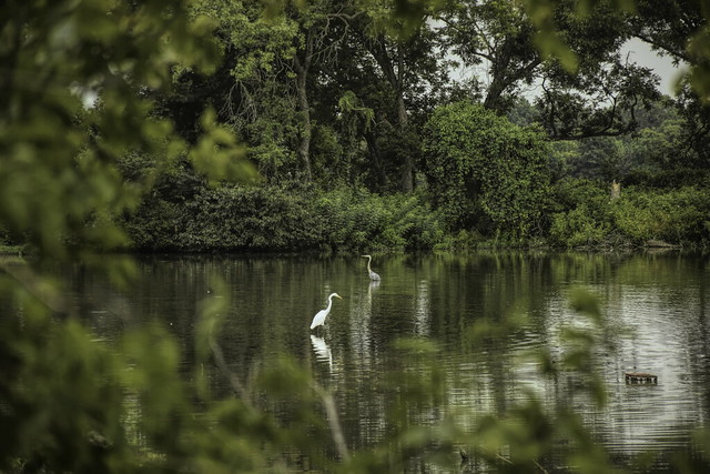 oxley water birds_DSC0275-Edit