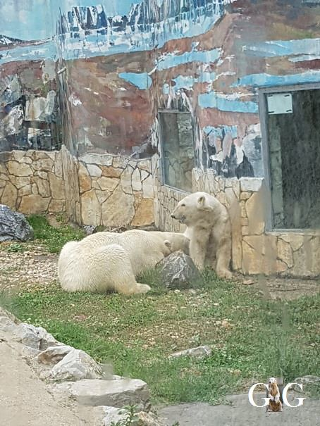 Besuch Zoo Sosto 18.06.201814