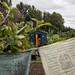 Scotland's Gardens Craigintinney Telferton July 2018 -126