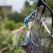 Scotland's Gardens Craigintinney Telferton July 2018 -47