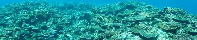 小さい珊瑚がたくさん♪