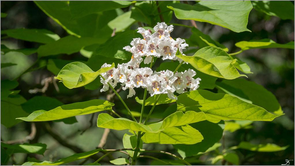 Jardin botanique Saverne: Rampants et fleurs 41279299920_e8e3efd288_b