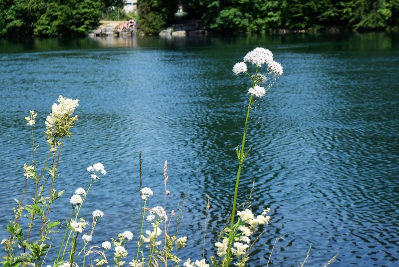 River Aare 02.07 (1)