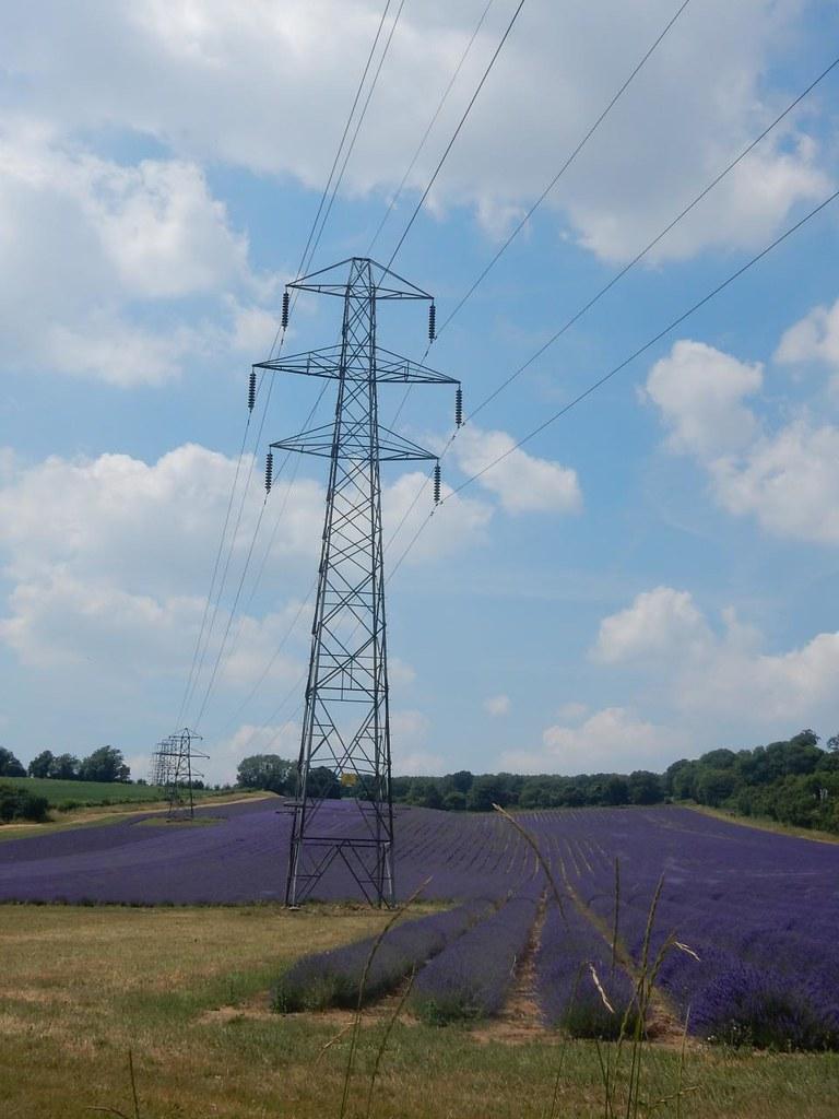 Lavender fields Shoreham figure of 8
