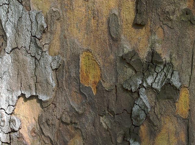 bark art 1, Nikon D3200, Sigma 35mm F1.4 DG HSM