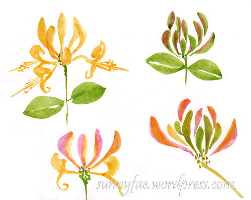 honeysuckle painting not outlined